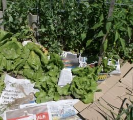 Place newspapers and cardboard between plants